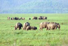 Top Most Famous Wildlife Sanctuaries in India