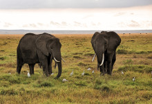 Travel to Kenya – The Most Glittering Tourist Destination
