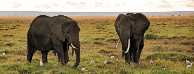 Travel to Kenya – The Most Glittering Tourist Destination