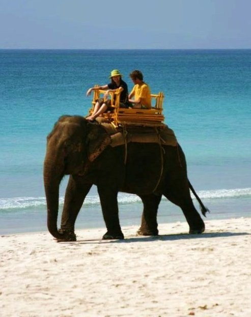 India_Tourism_Elephant