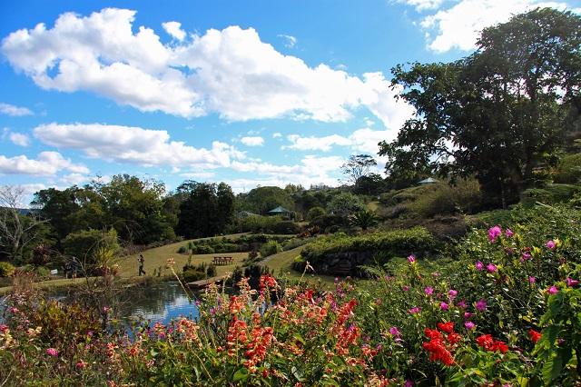 maleny_botanic_gardens