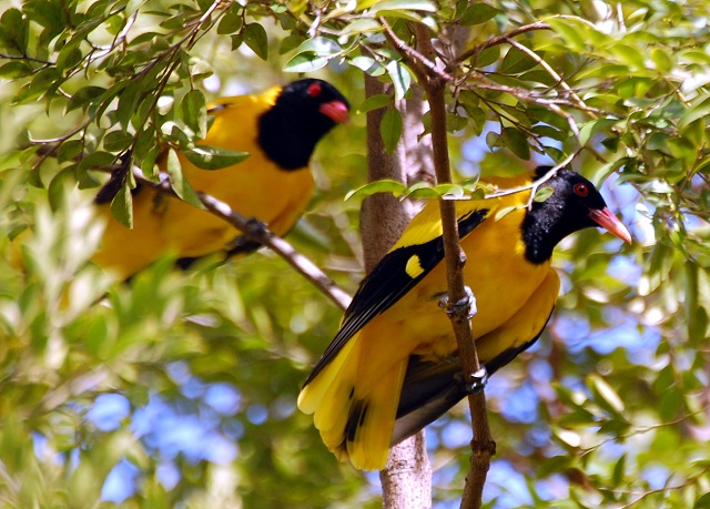 Birding In Sri Lanka